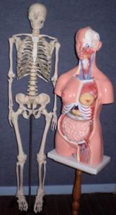 photo-site-anatomie-2.jpg